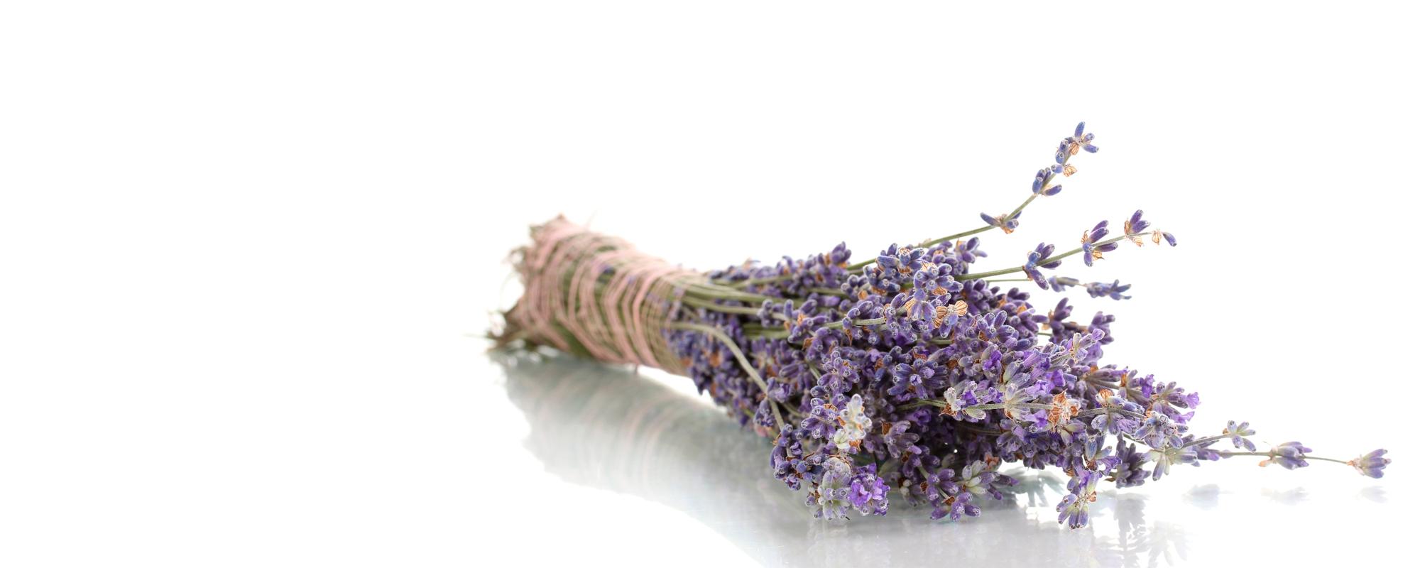 Productos para las alergias  todo el año, <span><br>no solo en primavera</span></br>